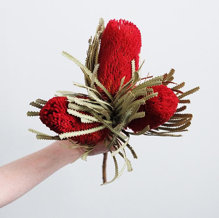 Banksa Protea