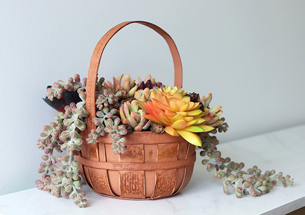 Fall Succulents in Basket